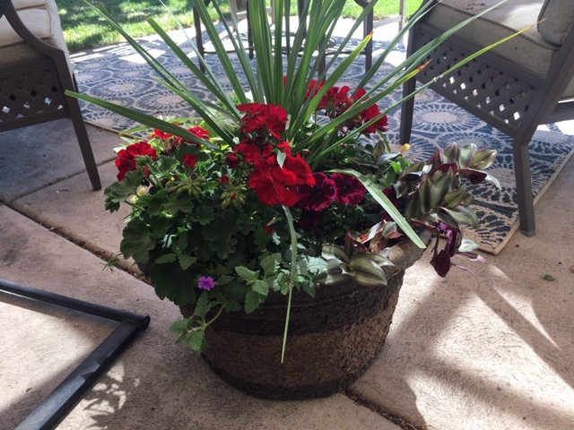 Container garden flower pot for patio.JPG with geraniums